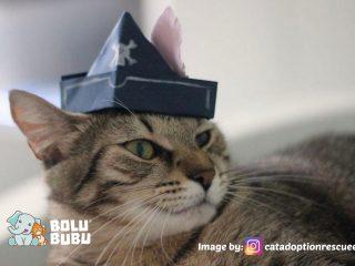 topi untuk kucing