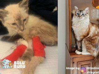 transformasi kucing adopsi