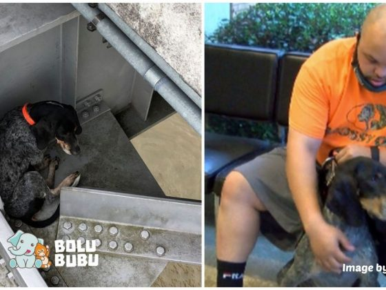anjing ini diselamatkan dari jembatan tinggi