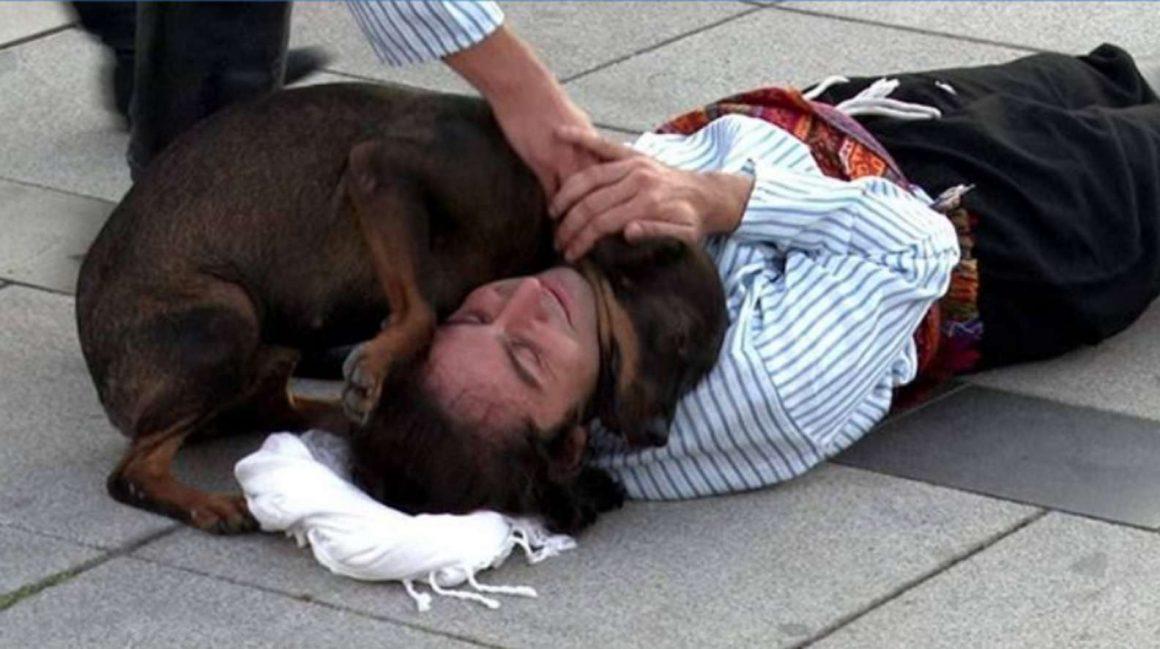 anjing berpelukan dengan manusia