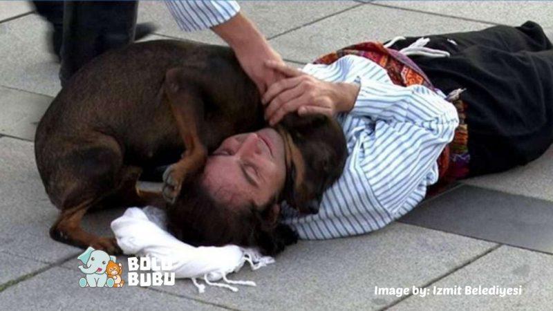 anjing liar menyelamatkan aktor yang sedang berakting
