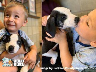 anjing sumbing yang diadopsi oleh anak dengan kondisi yang sama