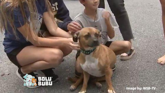anjing yang menyelamatkan tetangganya
