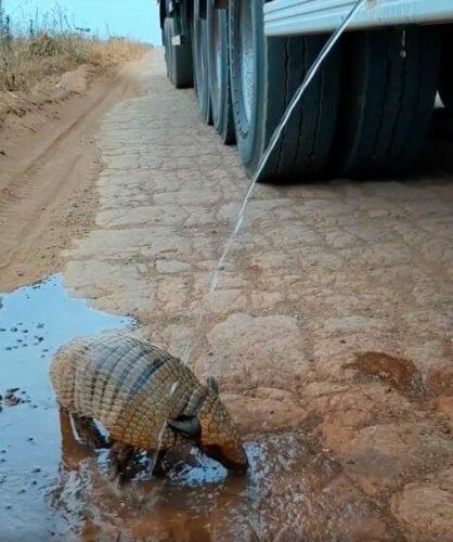 armadillo minum air