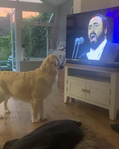 anjing menonton tv