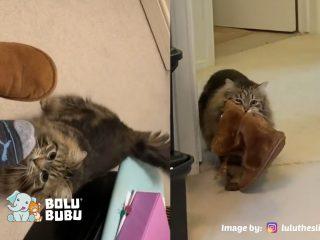 kucing yang selalu membawakan sandal pawrent-nya