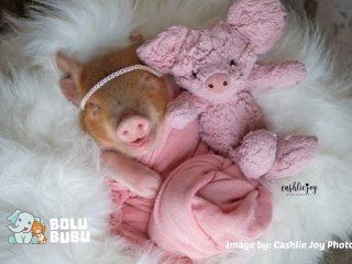 newborn photoshoot babi