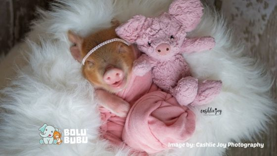 newborn photoshoot babi
