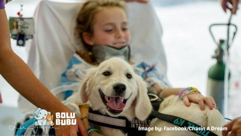service dog membantu anak yang lumpuh