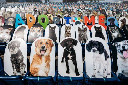 foto anjing dan kucing yang dipasang di kursi penonton pertandingan NFL