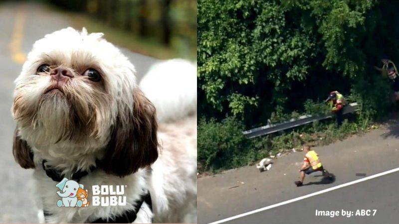 anjing yang berlari di tengah jalan raya