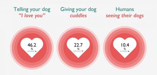 bagaimana anjing mempersepsi afeksi dari manusia