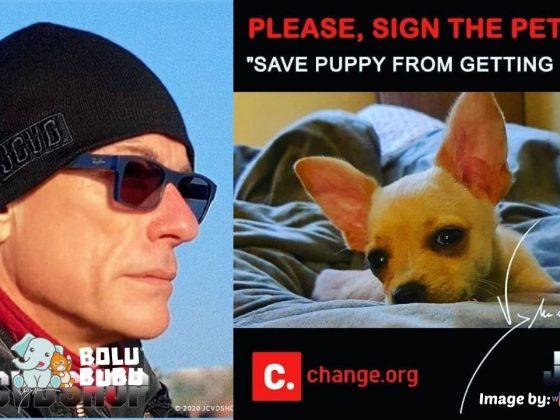 jcvd menyelamatkan anjing dari eutanasia