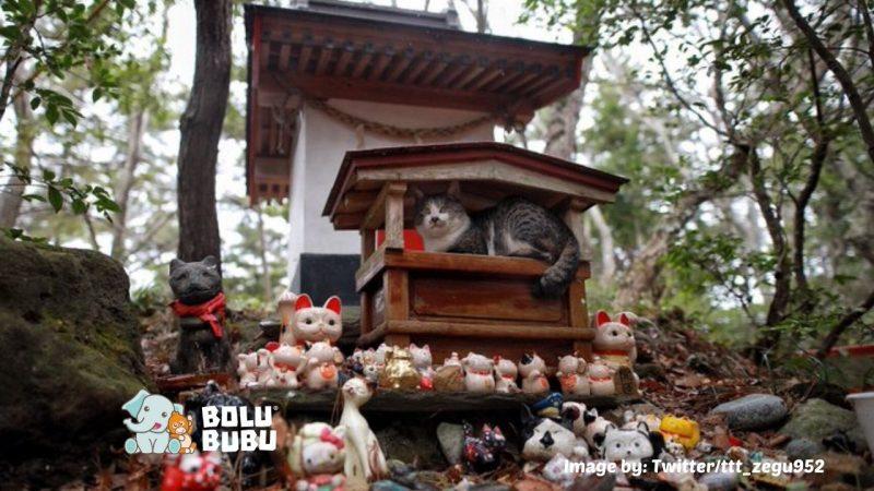 kucing berteduh di kuil kucing