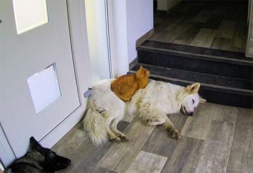 kucing duduk di atas punggung anjing