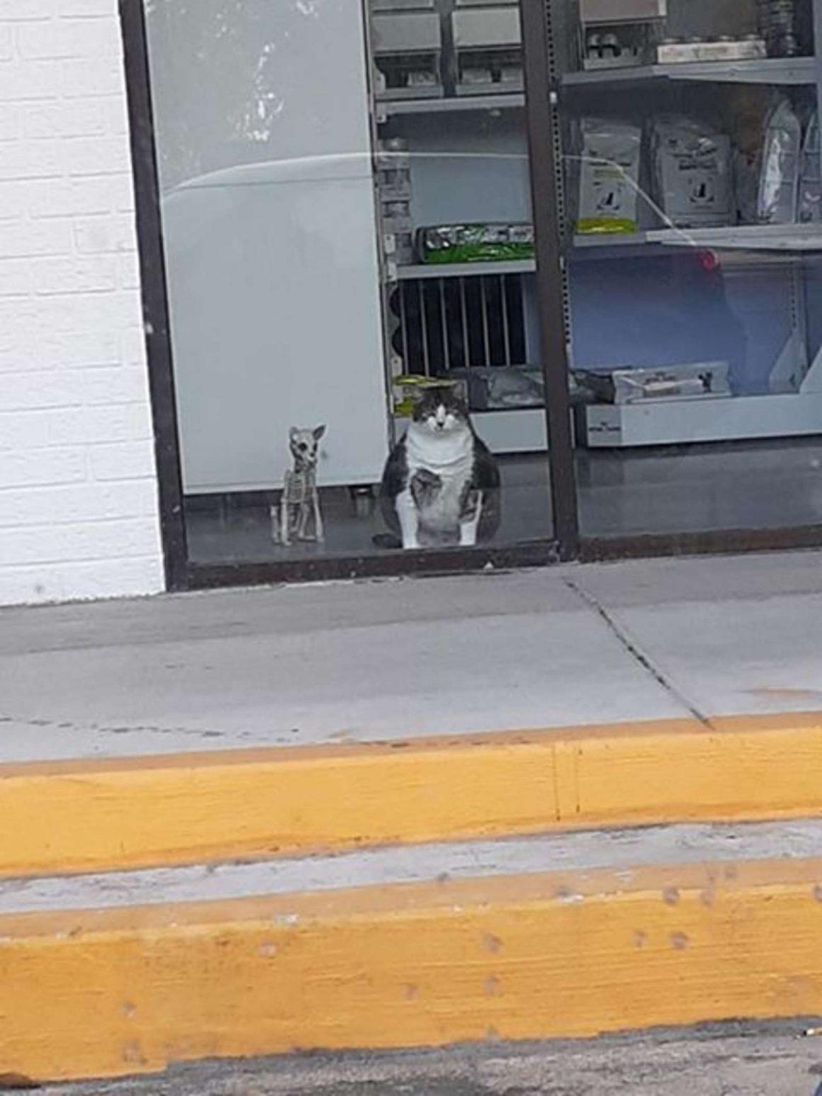 kucing gemuk di balik jendela kaca