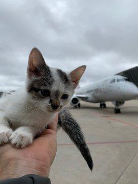 kucing kecil di dekat pesawat