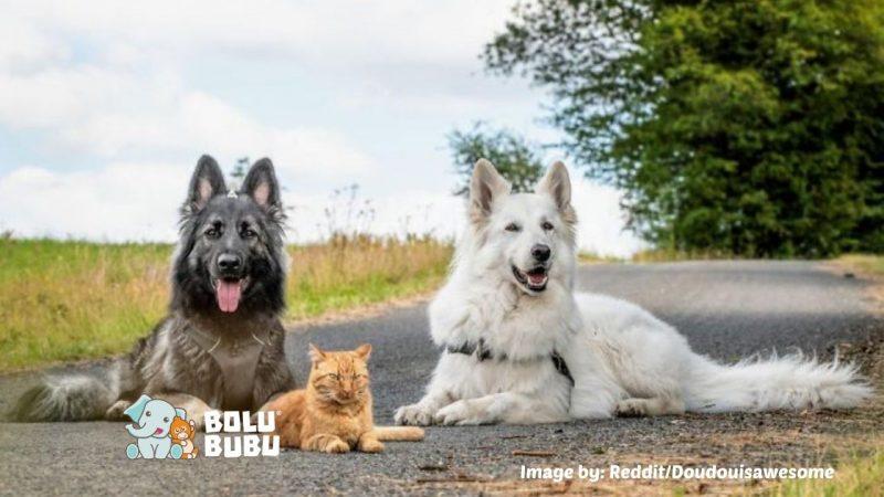 persahabatan anjing dan kucing
