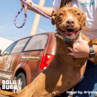 anjing yang diadopsi setelah 400 hari tinggal di shelter