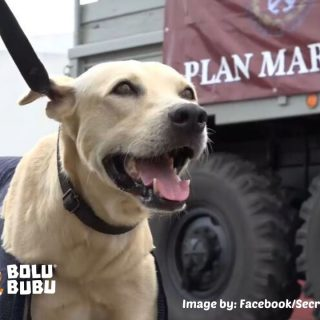 anjing yang diselamatkan oleh tentara