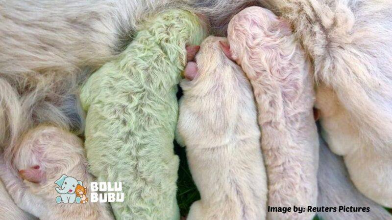 bayi anjing berbulu hijau