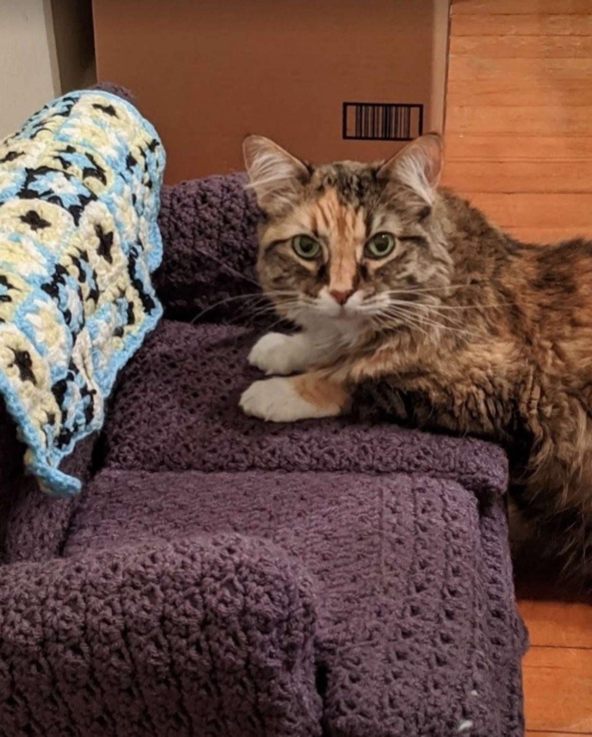 kucing di atas sofa rajutan