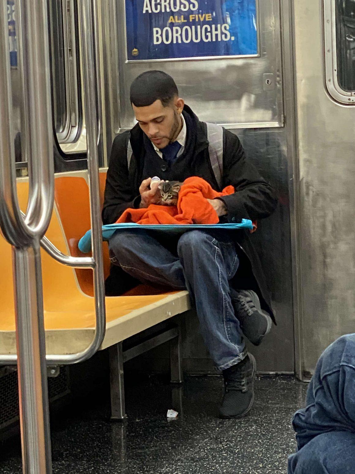kucing liar diberi minum susu oleh seorang pria di subway