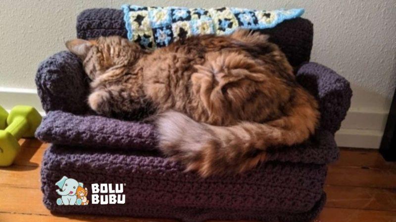 kucing tidur di atas sofa rajutan