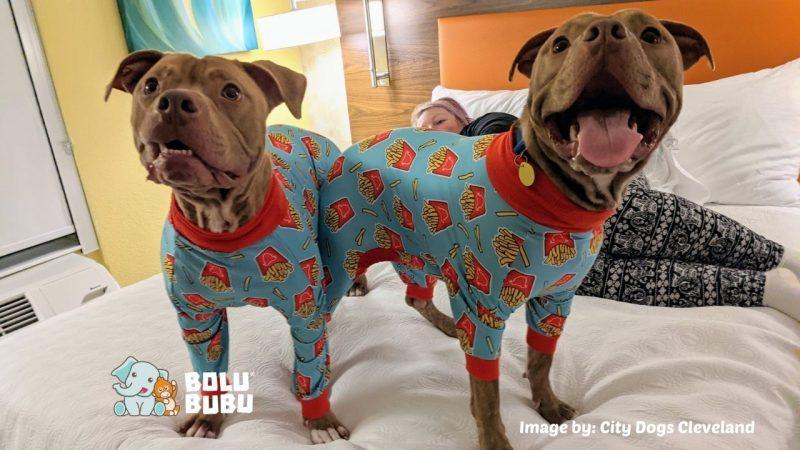 anjing shelter pakai piyama
