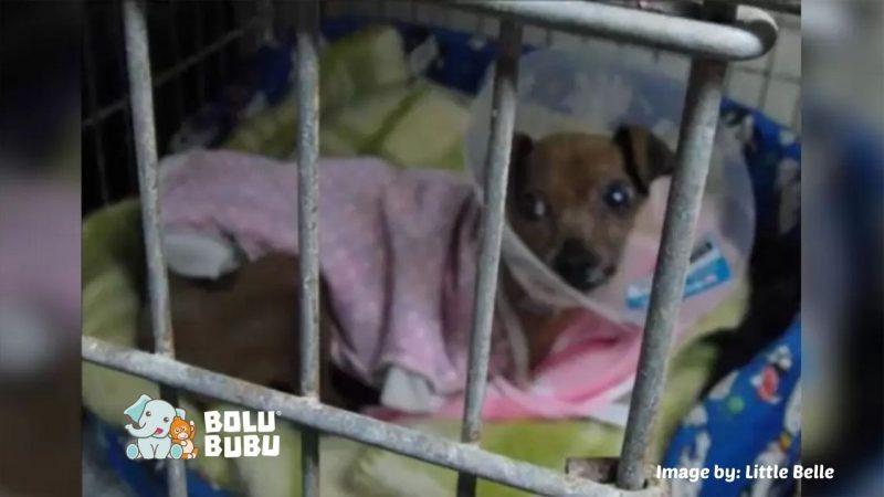 anjing yang diselamatkan dari industri ternak anjing