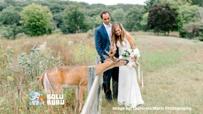 foto pernikahan bersama rusa