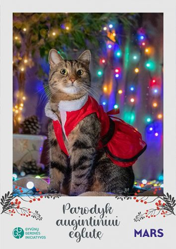 kucing merayakan natal