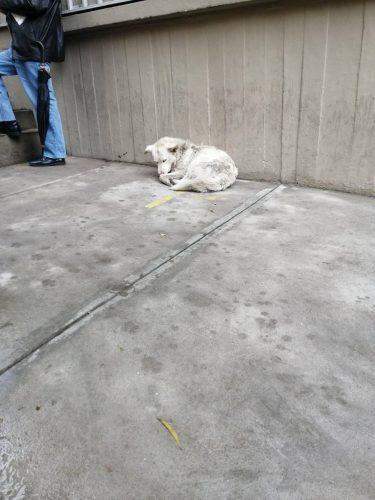 anjing liar di pinggir jalan