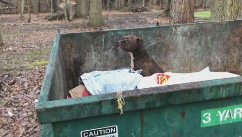 anjing yang dibuang ke tempat sampah