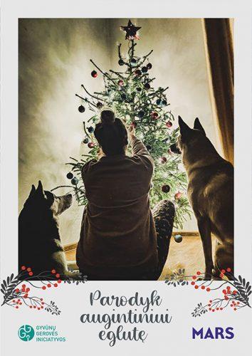 foto anjing bersama pemiliknya di dekat pohon natal