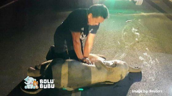 CPR pada gajah