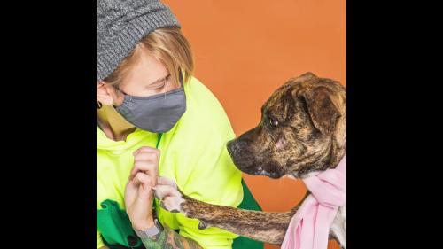 anjing dan seorang wanita memakai masker
