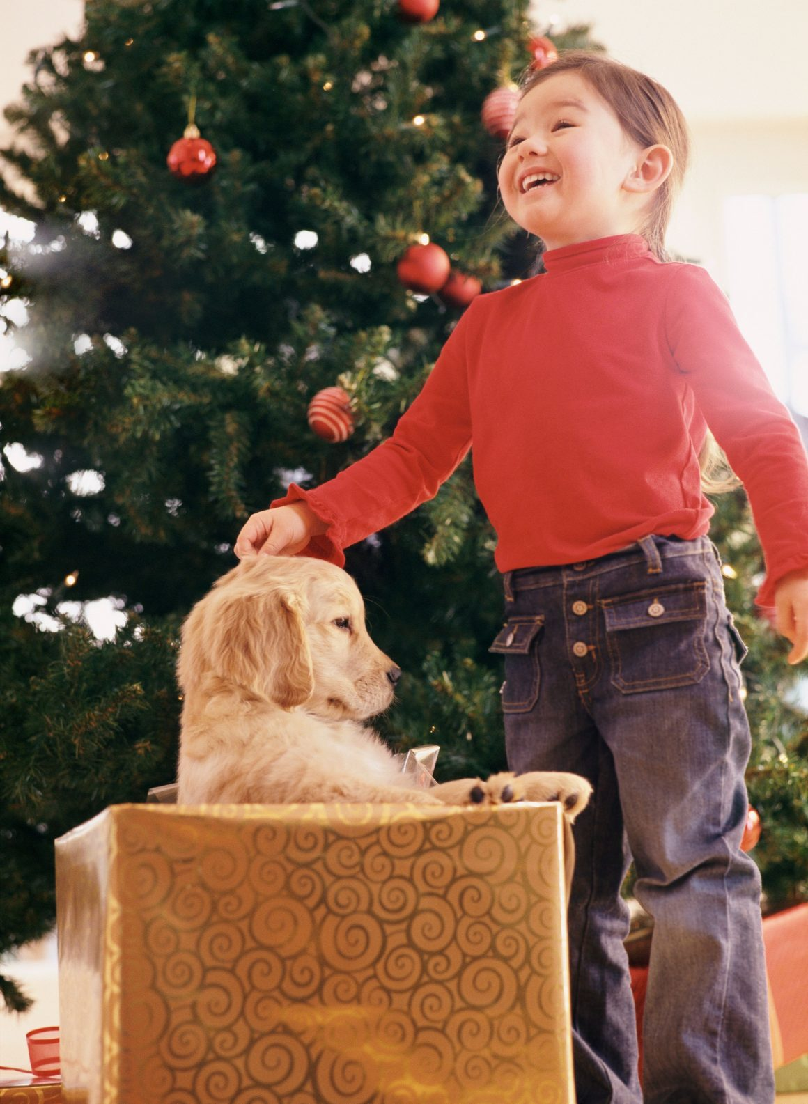 anjing di dalam kotak dengan anak laki-laki di sampingnya