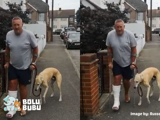 anjing bersimpati dengan tuannya yang pincang