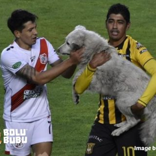anjing liar diadopsi oleh pemain sepak bola