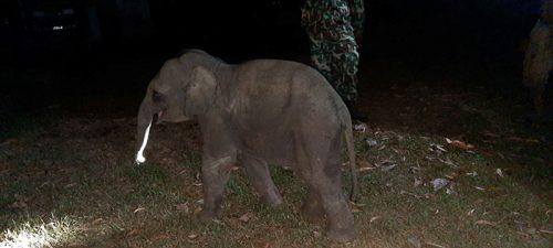 bayi gajah