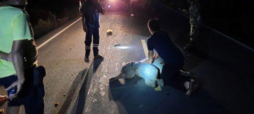 melakukan CPR pada gajah