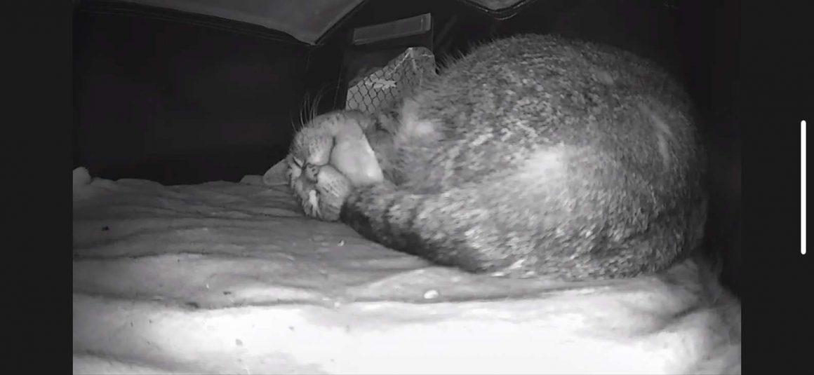 foto kucing di rumah hangat