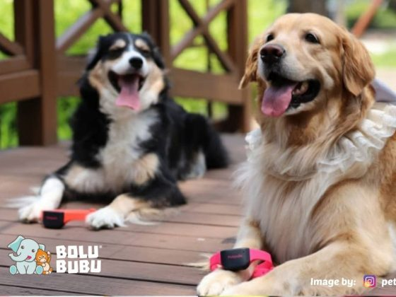 kalung anjing yang dapat menerjemahkan suara gonggongan
