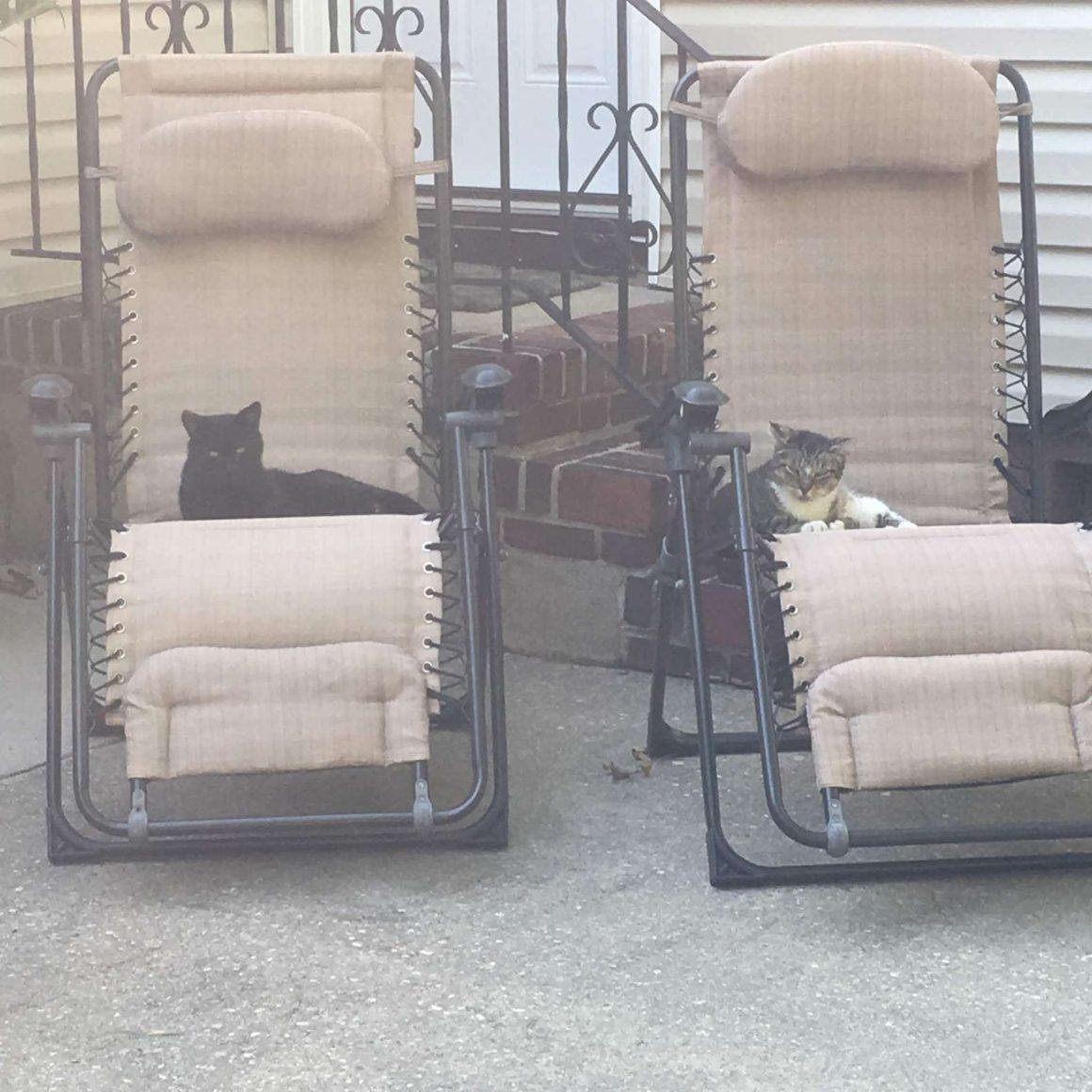 kucing di kursi taman