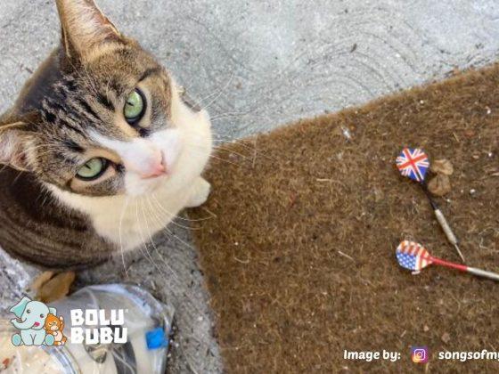 kucing klepto
