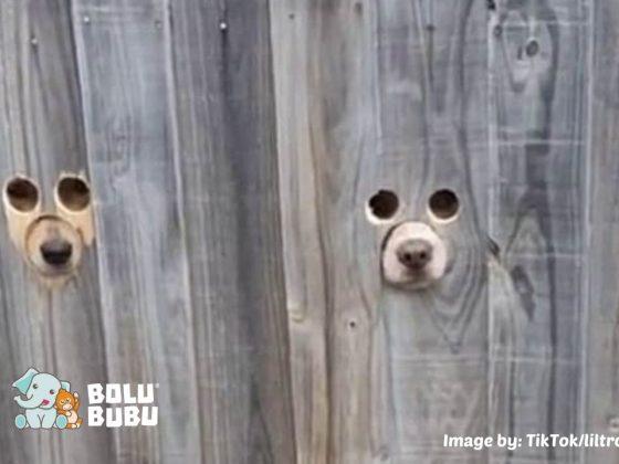 lubang intip untuk anjing
