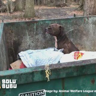 menyelamatkan anjing yang dibuang ke tempat sampah