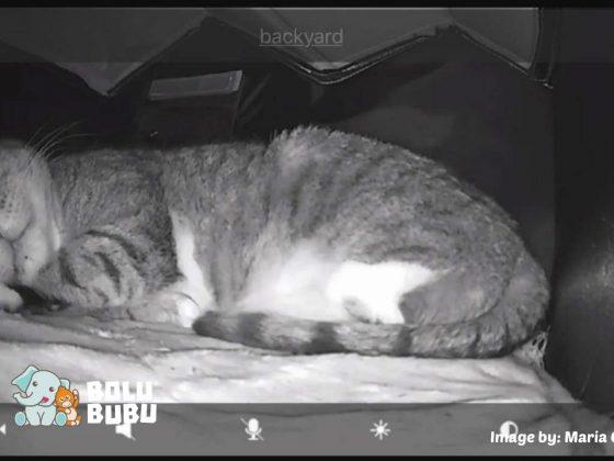 rumah hangat untuk kucing liar