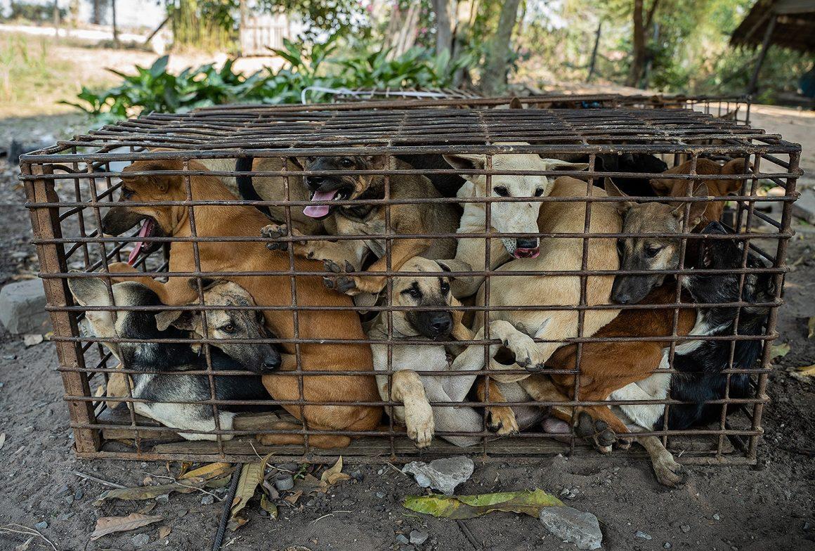 anjing di dalam kandang sempit